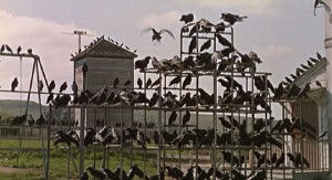 Crows massing in the schoolyard in Alfred Hitchcock's The Birds (1963)