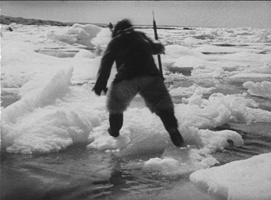 Nanook on the ice