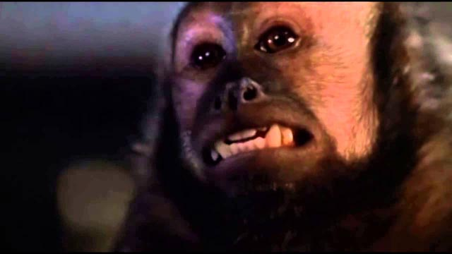 Boo the Capuchin monkey gives a star performance as Ella in George Romero's Monkey Shines