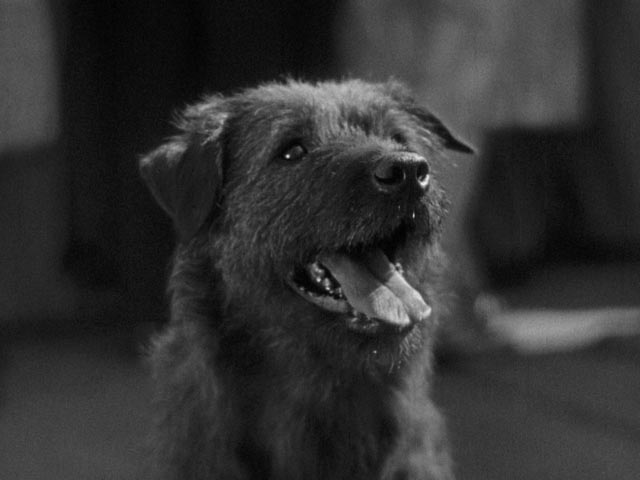King Tut, Harold Lloyd's talented canine co-star in Speedy (1928)