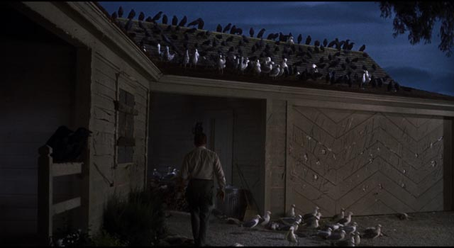 The calm between attacks in Alfred Hitchcock's The Birds (1963)