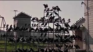 Crows gathering the school playground in Alfred Hitchcock's The Birds (1963)