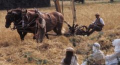Villagers bring in the 1911 harvest in Peter Hall's film of Ronald Blythe's Akenfield (1974)