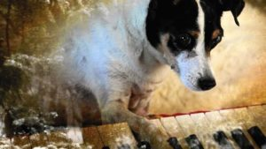 Lolabelle plays the piano in Laurie Anderson's Heart of a Dog (2015)