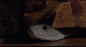 The deadly black mamba looks amused in Piers Haggard's Venom (1981)
