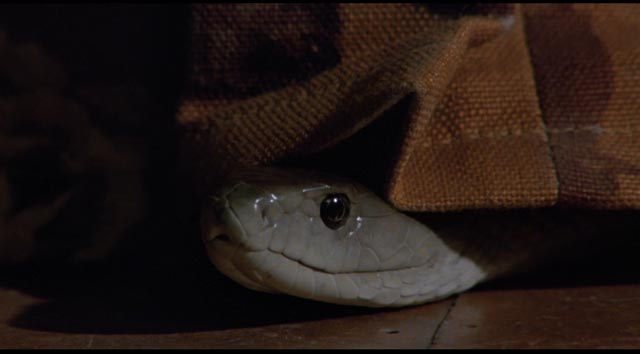 The deadly black mamba looks amused in Piers Haggard's Venom (1981)