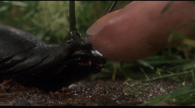 The signature image from J.P. Simon's adaptation of Shaun Hutson's Slugs (1988)