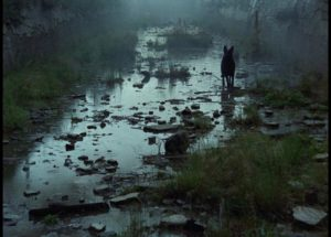 The dog is the only sign of life encountered in the Zone in Andrei Tarkovsky's Stalker (1979)