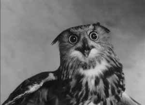 The accusatory gaze of the owl in Georges Franju's Plein feux per l'assassin (1961)