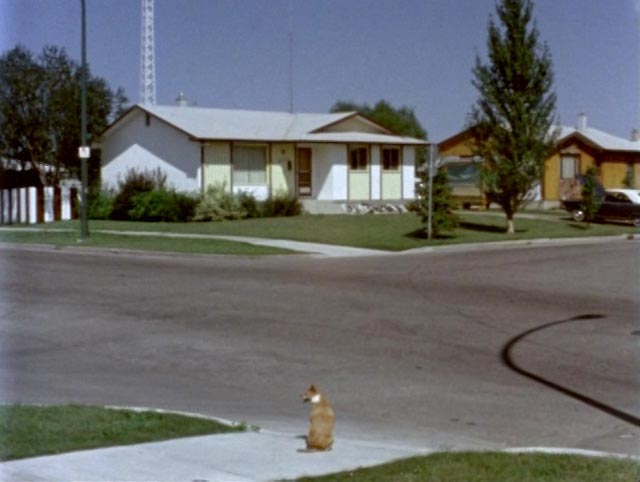 The suburbs as alien landscape in John Paizs' Springtime in Greenland (1981)