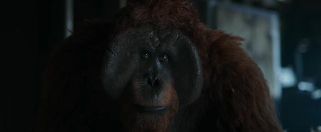 Karin Konoval as Maurice, the conscience of the apes in Matt Reeves' War for the Planet of the Apes (2017)