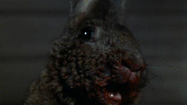 """That rabbit is dynamite!"" - not: William F. Claxton's Night of the Lepus (1972)"