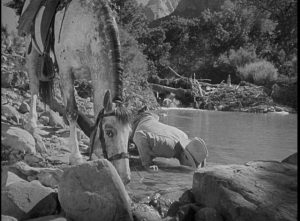 A man's horse is his best friend in the West in Andre de Toth's Ramrod (1947)