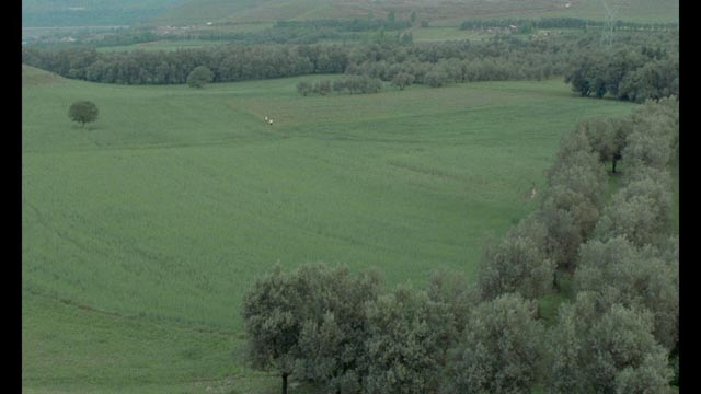 Hossein (Hossein Rezai) and Tahereh (Tahereh Ladanian) almost disappear into the landscape in the final shot of Abbas Kiarostami's Through the Olive Trees (1994)
