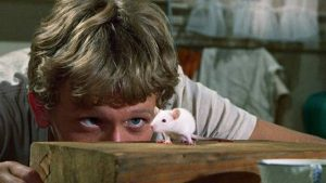 They might be killers, but the rats are cute in Daniel Mann's Willard (1971)