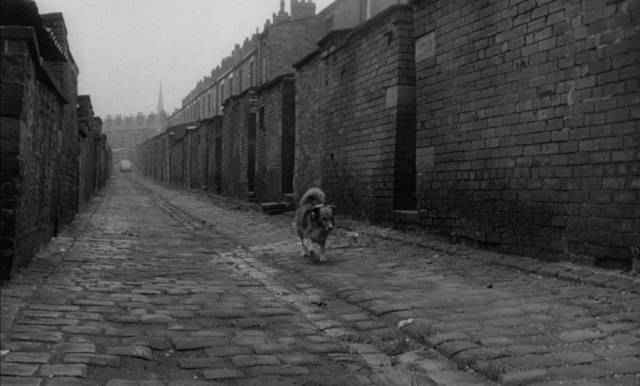 Animals prowl a landscape of brick and stone in Bryan Forbes' The Whisperers (1967)