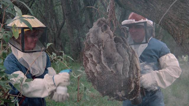 Best not to poke the hive in Alfredo Zacarias' The Bees (1978)