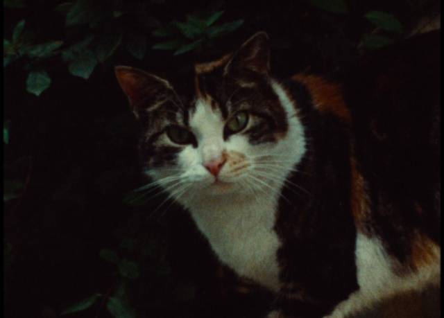 Cats abound, watching over human activities in Jacques Rivette's Celine and Julie Go Boating (1974)