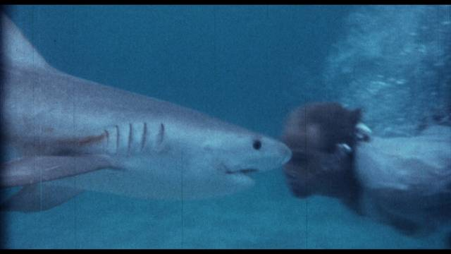 Cast and crew swim with the sharks in William Grefé's Mako: Jaws of Death (1976)